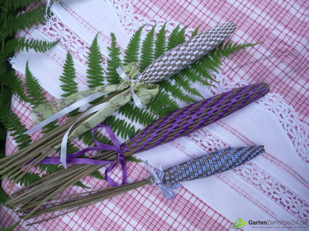 Lavendelkeule in verschiedenen Größen