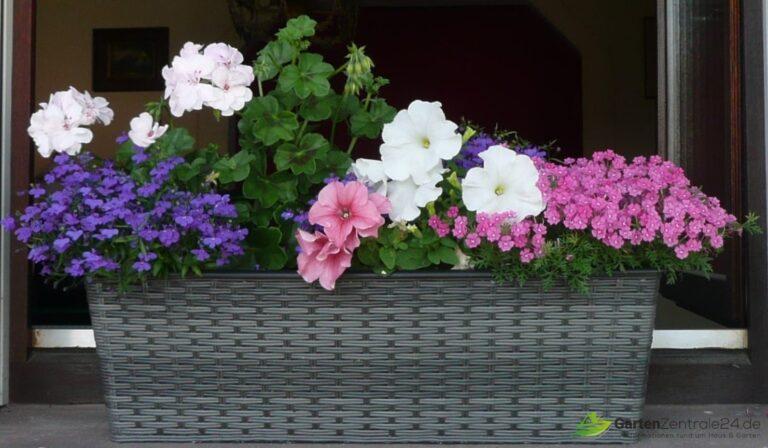 Üppiger Flor