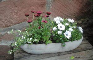 Kapkörbchen rot und weiß bei richtiger Blumenpflege