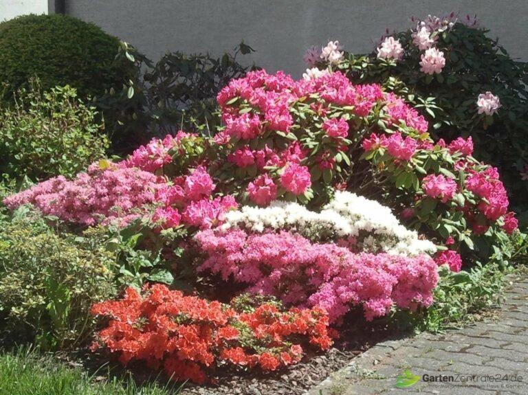 Der Garten im Mai: Ein Sumpfbeet in voller Pracht
