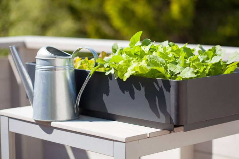 Gemüse auf Balkon züchten